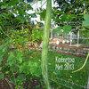Bibit / Benih / Seed Sayur Pare Belut Mudah Tumbuh Snake Gourd Unique (14785993) di Kota Jakarta Selatan