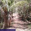 Kavling Kebun Aspek Perumahan (2992454) di Kab. Jembrana