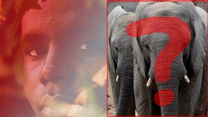 5 Breathtaking Secrets Elephants Don't Tell You About