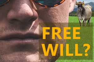 Does Free Will Exist? You Need To Stop Being The Victim