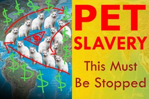 Pet Slavery Must Be Stopped: Are You Guilty of This?