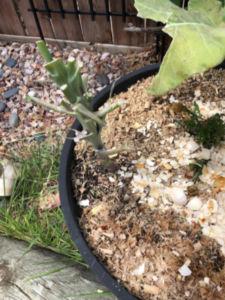 Pests in garden