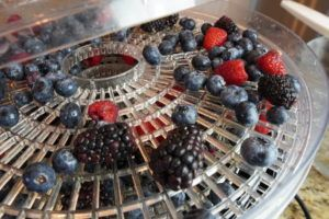 Dehydrating Berries for Pemmican