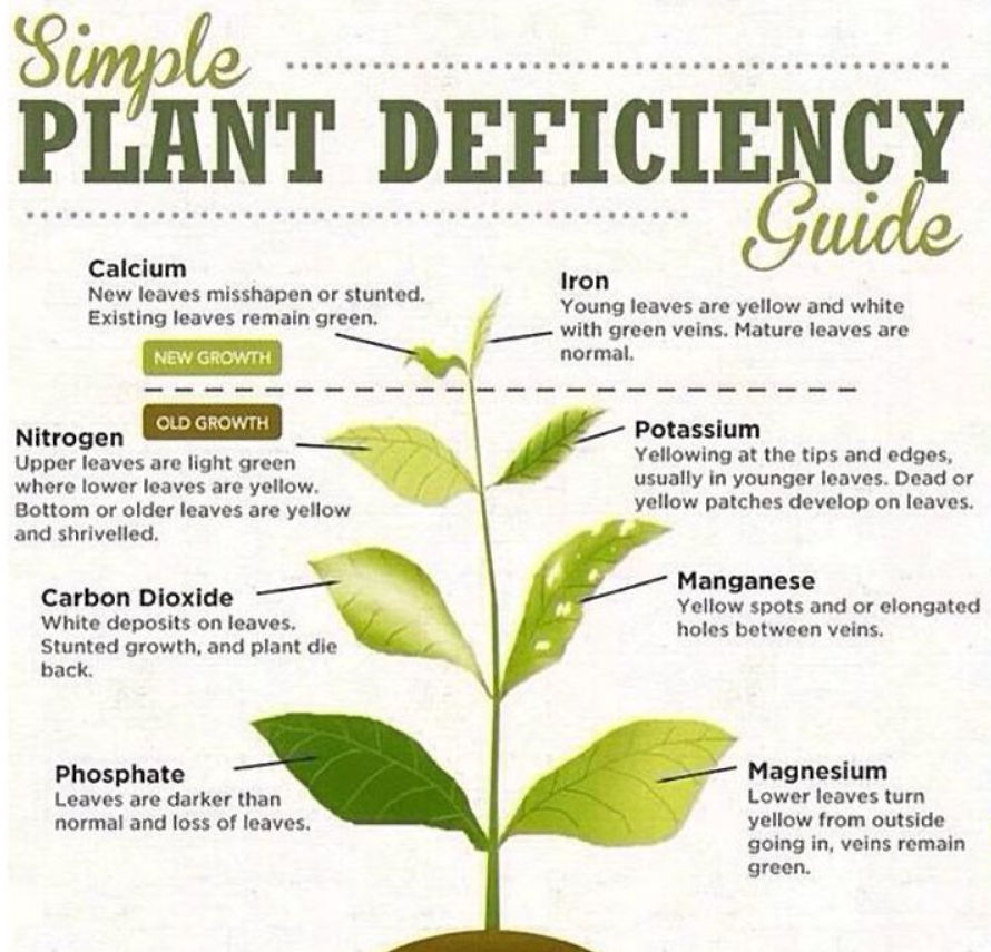 Diagnosing plant problems
