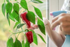 Windowsill peppers