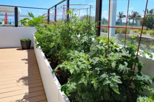 Small garden big crop harvest