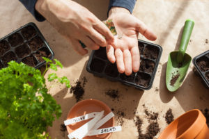 Planting seeds after a disaster