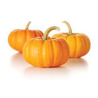 DB Yellow Pumpkin Image