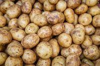 DB potato (urulakilangu) Image