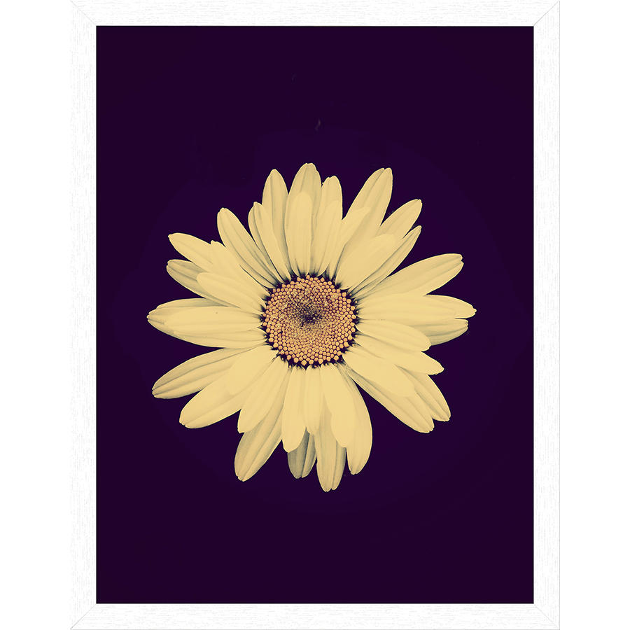 DailyObjects Half Crazy Flower in Black Framed Wall Art White Small ...