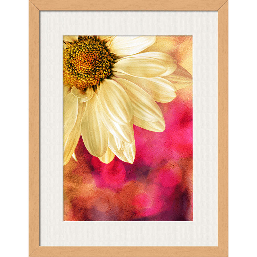 DailyObjects Rainbow Daisy Framed Wall Art With Border Pine Small ...