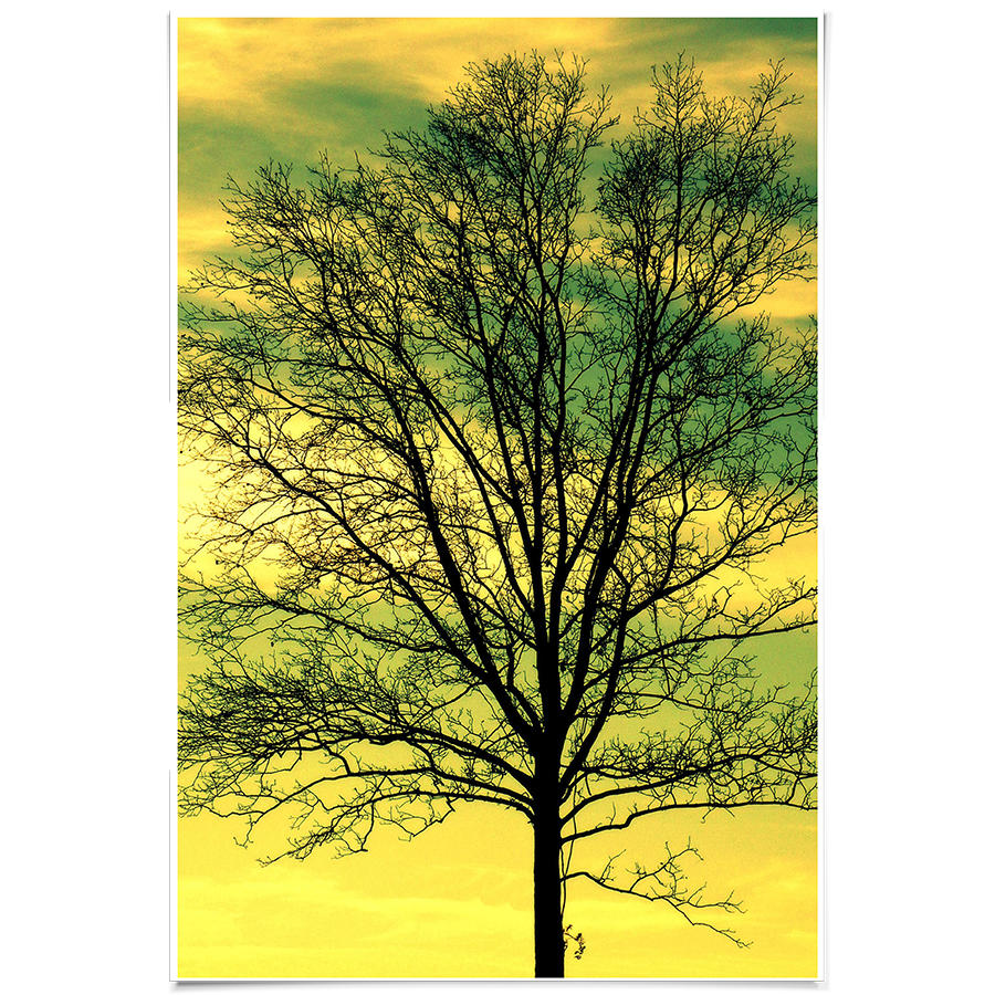 DailyObjects Tree Sky Small Wall Art Print-Small Buy Online in India ...