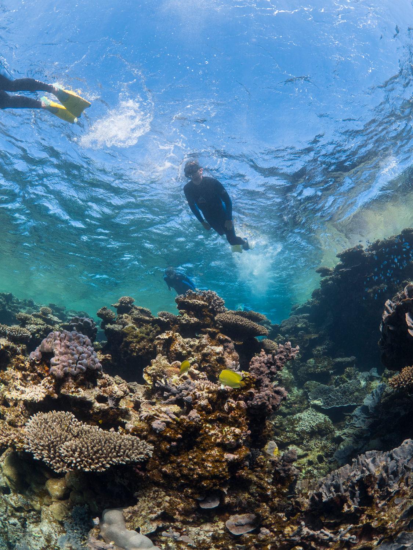 Een snorkelaar bij het Ningaloo Rif in West Australië.