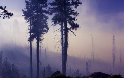 WILDFIRE MITIGATION: THE LITTLE THINGS YOU CAN DO TO PROTECT YOUR HOME