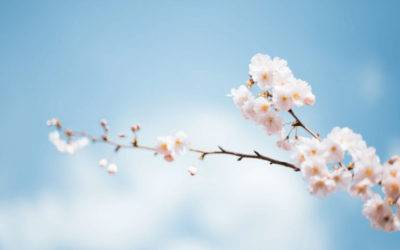 SPRING CLEAN UP DONE RIGHT: HOW TO SPRING CLEAN & WHEN TO HIRE A CLEANING SERVICE