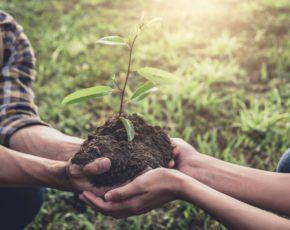Pessoas segurando muda de planta