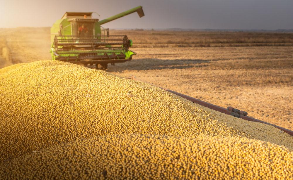 Brasil exporta US$ 141 milhões em soja para Reino Unido. (Fonte: Shutterstock)