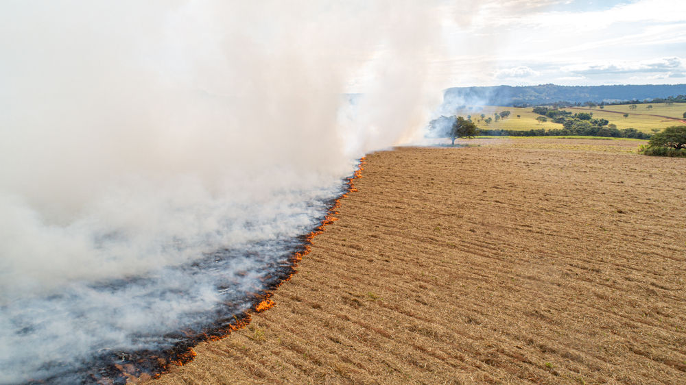 Cerca de 20% do Pantanal sofreu com os grandes incêndios deste ano. (Fonte: Shutterstock)