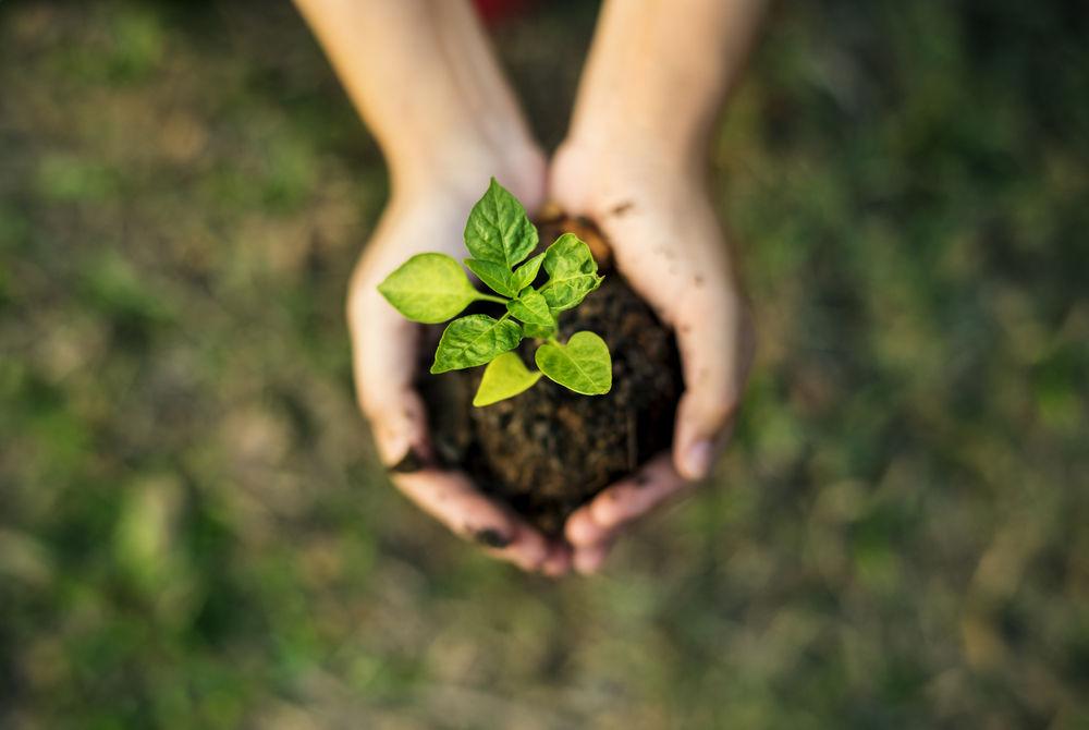 Embalagem com material reciclável faz parte do Plano de Agricultura Sustentável da Syngenta. (Fonte: Shutterstock)