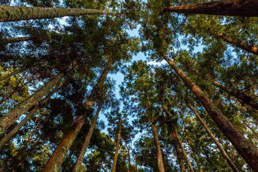 Sequestro de carbono por árvores preservadas em propriedades rurais pode gerar recursos extras para agricultores. (Fonte: Shutterstock/Fsolipa/Reprodução)
