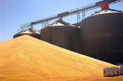 Estoques públicos garantirão suprimento de milho a pequenos criadores de animais. (Fonte: Aprosoja/Reprodução)