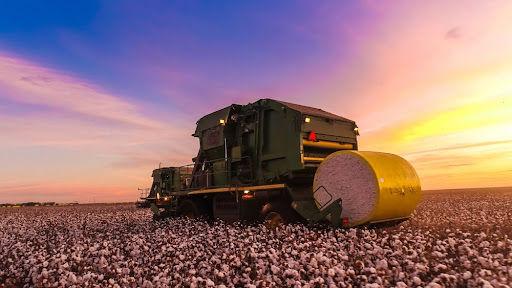 Mecanização total e modelo empresarial garantem competitividade do algodão brasileiro no mercado internacional. (Fonte: Shutterstock/lourencolf/Reprodução)