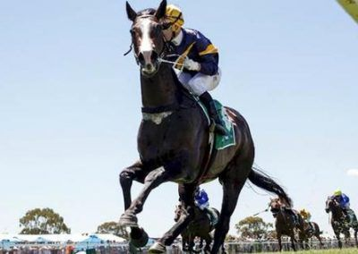 Price-Looks-For-Guineas-Grunt