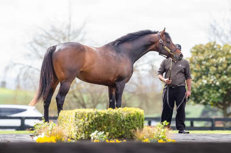 Tarzino continues to grow in favour with breeders