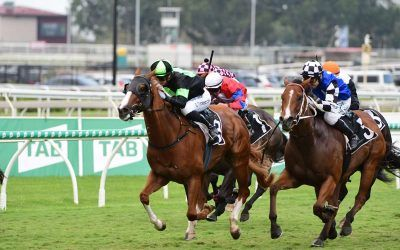 Is this QLD's most improved horse?
