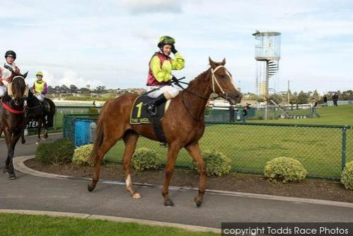 Impeccable Me Wins Warrnambool R58 1200m