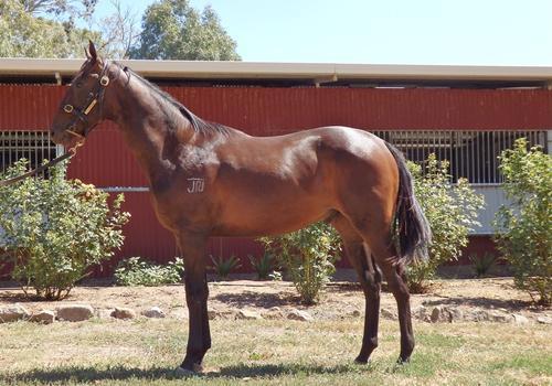 Bon Hoffa Bay Yearling Colt 10% $1000 5% $500