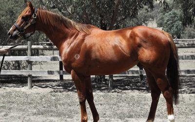 Bon Aurum Relocated To Riverbank Farm