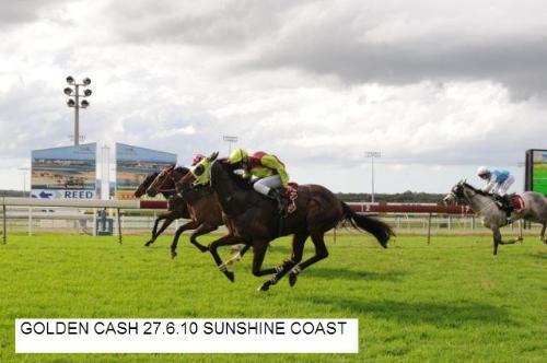 Golden Cash | Sunshine Coast QLD