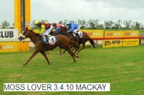 Moss Lover | Mackay QLD