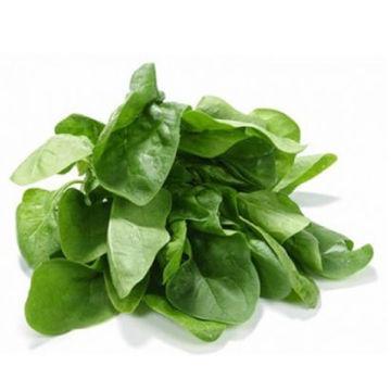 delhi-palak-leaf-whole-bunch