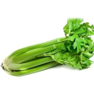 celery-1-kg