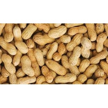 groundnut-100-gms