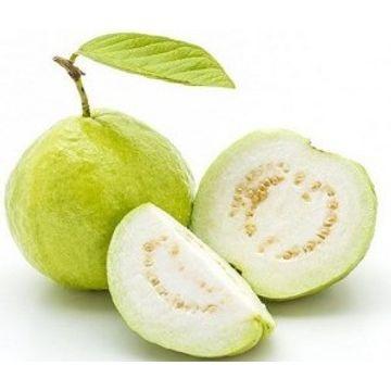 guava-5-kgs