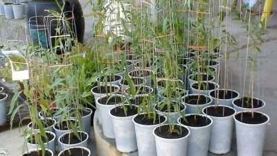 Се подготвуваат пасоши и за растенијата