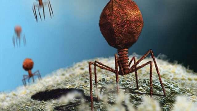 virusi-i-bakterii.jpg