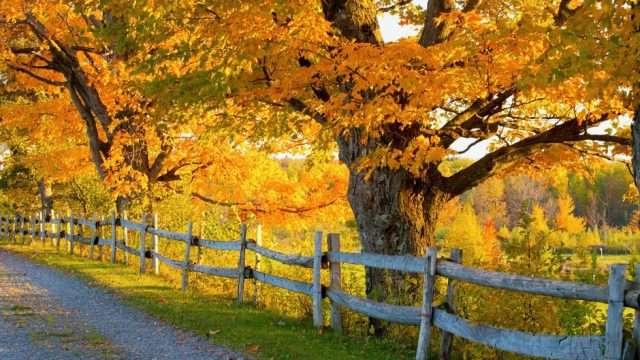 jesen-narava_i940x530.jpg