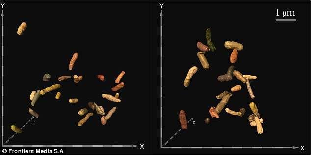 bakterii.jpeg