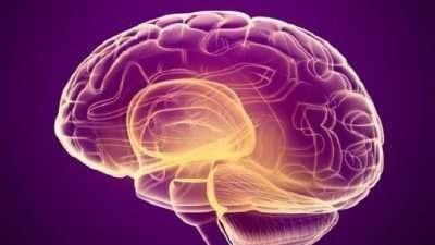 Научниците креирале импланти за мозок кои ја подобруваат меморијата за 30%