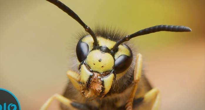 insekti.png