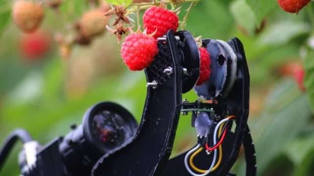 robot-picking-raspberries.jpg