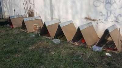 """Студенти од """"Стив"""" направија куќарки за бездомните кучиња"""