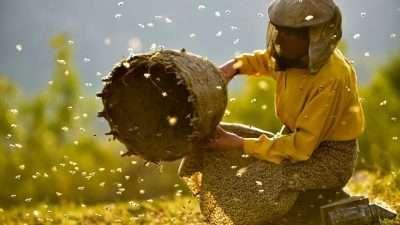 """""""Медена земја"""" влезе во потесниот избор за номинација за """"Оскар"""" за најдобар документарец и за најдобар странски филм"""