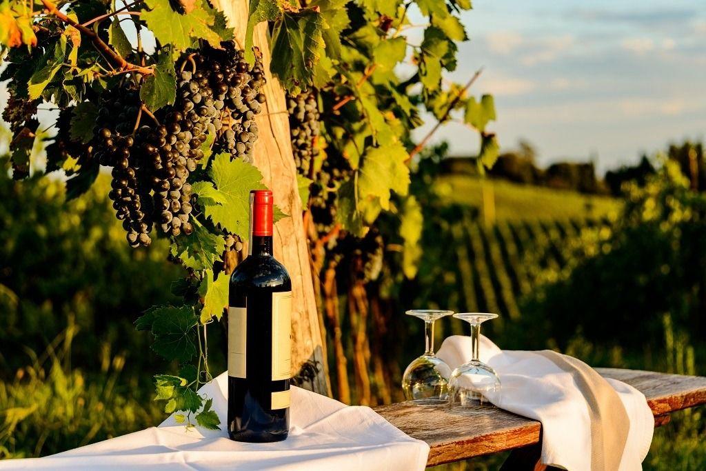 Food-Wine-128