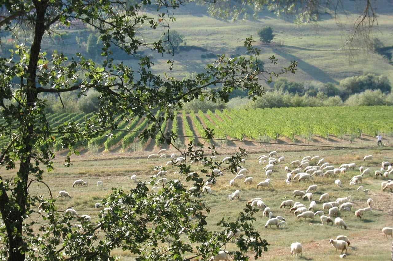 1-rent-luxury-farm-estate-in-italy