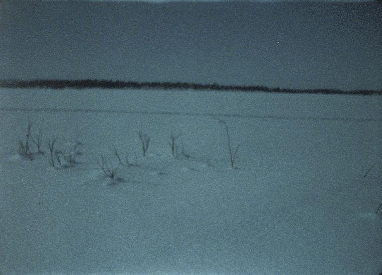 The Ivalo River Delta